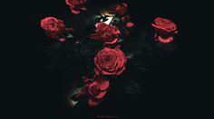 赤いバラの花びら 黒い背景 - Google 検索