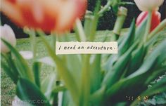 I need an adventure quotes quote flowers adventure