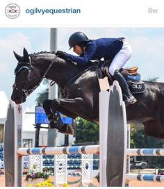 Ogilvy Equestrian, halfpad, saddle pad, horse show, horse, show jumping, riding, fashion, tack