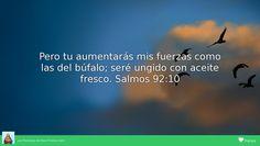 Pero tu aumentarás mis fuerzas como las del búfalo; seré ungido con aceite fresco. Salmos 92:10