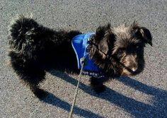 Versmold: Ben 2 Jahre alter Rüde absoluter  Familienhund verträglich und verschmust