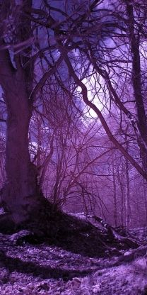 Purple forest.  For similar pins please follow me at -https://www.pinterest.com/annelouise1959/colour-me-purple/