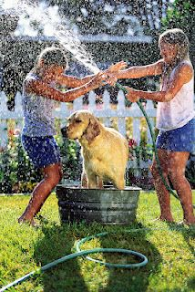 sharing the chore of giving the dog a bath.  SummerTime Fun List