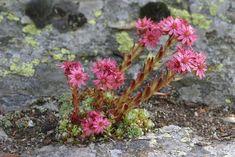 Stačia 2 veľmi zdravé látky a odstránite každú cystu alebo fibróm. - Báječný lekár Plants, Flora, Plant, Planting