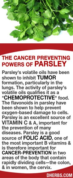"Parsley's volatile oils help to inhibit tumor formation, particularly in the lungs. The activity of parsley's oils qualifies it as a ""chemoprotective"" food. The flavonoids in parsley help prevent oxygen-based damage to cells. Parsley is an excellent source of vitamin C & A, important for the prevention of many diseases. It is a good source of folic acid, & is therefore important for cancer-prevention areas of the body that contain rapidly dividing cells—the colon, & the cervix. #dherbs"
