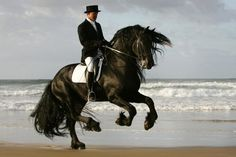 aussiedressage:  Django of Cacharel Australian Grand Prix Friesian and crowd favourite. This breathtaking stallion is like watching poetry in motion. (via trotlikecrazy)