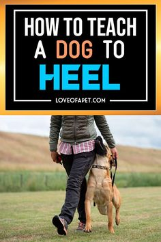 How to Teach a Dog to Heel. There are a lot of methods that many professionals suggest for training your dog. The best method to train your dog to heel is to lure him and then reward. Source by LoveOfAPet Service Dog Training, Puppy Training Tips, Best Dog Training, Service Dogs, Training Pads, Training Classes, Brain Training, Dog Agility Training, Training Videos