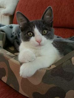 I'm awesome....and I know it!:) #cats