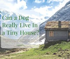 Can A Dog Really Live In A Tiny House?