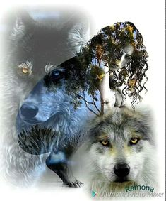 Trendy Ideas For Tattoo Wolf Indian Spirit Animal Nature Tattoo Sleeve, Nature Tattoos, Girls With Sleeve Tattoos, Sister Tattoos, Elephant Tattoos, Wolf Tattoos, Wolf Sketch, Safari, Wolves And Women