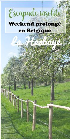 Découvrez la Hesbaye (Haspengouw) en vespa: des vergers à perte de vue, des châteaux, et de jolis villages! Vespa, Outdoor Structures, Garden, Blogging, Community, Dreams, Belgium, Travel, World