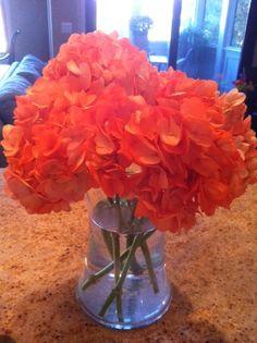 orange hydrangea...my fav flower!