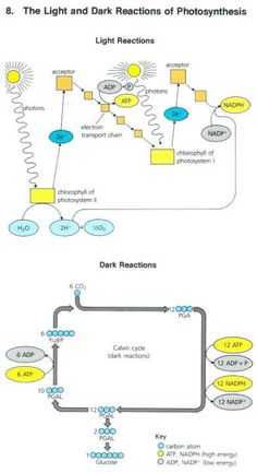 Photosynthesis diagram bing images biology pinterest super simplified photosynthesis ccuart Choice Image