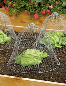 Wire Cloche by Colonial Tin Works Gardener's Supply is part of Vegetable garden design - In the garden, this chicken wire cloche protects plants from nibbling wildlife and curious cats Indoors, transform decor from ordinary to delightful Backyard Vegetable Gardens, Vegetable Garden Design, Veg Garden, Garden Soil, China Garden, Chicken Garden, Garden Plants, Potager Garden, Vegetable Planters