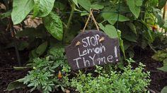 Danny and Shanna Blackwell's garden, Baltimore Sun Garden, Home And Garden, Poison Oak, One Summer, Garden Features, Growing Vegetables, Lilies, Baltimore, Acre