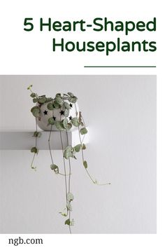 When one heart isn't quite enough, it's time to bring on an entire plant! A string of hearts (Ceropegia woodii) has trailing stems dotted with small, heart-shaped leaves that are usually green and silver but can sometimes have a touch of pink. This vine loves plenty of sunlight, so place your plant in a south-facing window. Indoor Gardening, Container Gardening, Herbs Garden, String Of Pearls, Bedroom Night Stands, Bright Flowers, Small Heart, Hanging Baskets, Planting Succulents