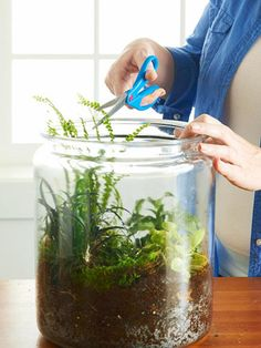 It's easy to make a kokedama moss garden. Learn how!