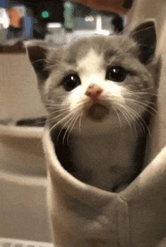 so here iz some kittens (Gallery) It iz Monday. so here iz some kittens (Gallery) It iz Monday. so here iz some kittens (Gallery) Cute Baby Cats, Cute Little Animals, Cute Cats And Kittens, Cute Funny Animals, I Love Cats, Kittens Cutest, Funny Cats, Cute Dogs, Cute Babies
