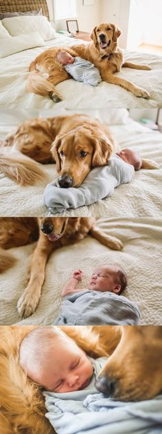 A Baby Boy His Dog Lifestyle Newborn Session