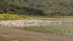 Bird watching, Tanzania