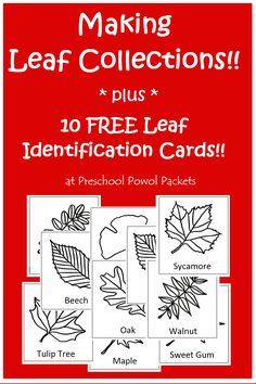 Tree Leaf Collection with {FREE} Leaf Identification Cards! | Preschool Powol Packets