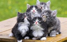 5 cute kittens, probably up to no good. :)