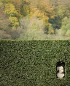 Head in a Hedge, Groombridge Place, Kent