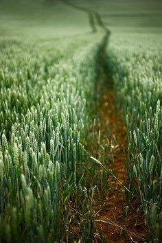Evidence of a Creator, someone's been here before us......the evidence is in the dirt and path. Field by Shantideva, via Flickr