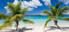 Beach and palms.Cariby a