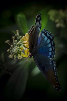 """Photo """"red spotted purple butterfly"""" by Jeff Graham #500px"""