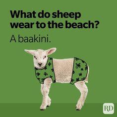 Pig Puns, Sheep Puns, Bear Puns, Funny Jokes For Kids, Corny Jokes, Dad Jokes, Good Burns, Knock Knock Jokes, Sheep Shearing