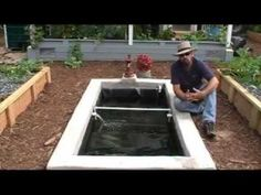 How we add freshwater prawns / shrimp to our Aquaponics system - YouTube