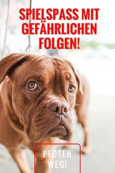 Hund und Spielzeug: Achtung, nicht jedes Spielzeug ist gut für Euren Hund, hier erfahrt Ihr mehr...