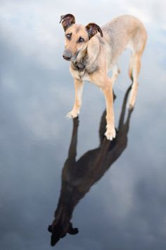 Outdoors dog photography! Dog photographer Elke Vogelsang, Germany