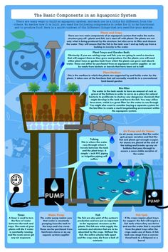 Basic Aquaponics Plan Infographic Check out the website to see Aquaponics System, Aquaponics Diy, Hydroponic Gardening, Organic Gardening, Aquaponics Greenhouse, Organic Farming, Paludarium, Vivarium, Vertical Farm