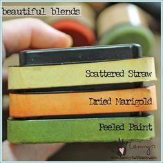 Beautiful Blends Marigold Garden   www.tammytutterow.com                                                                                                                                                      More