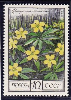 Russian Stamp - Buttercups, Oak Forest