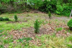 Fast-growing evergreens to plant for some quick privacy