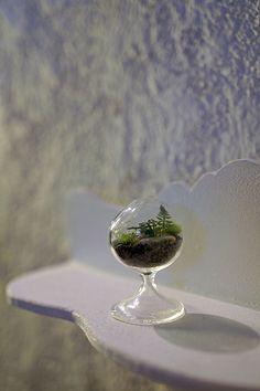 Miniature terrarium! | Flickr - Photo Sharing!
