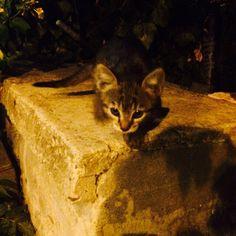 My cute little kitten