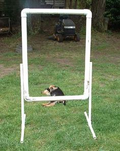 """Build Your Own Agility Course: Tire Jump. What you need: 1"""" pipe 20' section; 4 elbows. Base for jump: 4 1"""" PVC pipe cut to 18""""; 2 1"""" pipe cut to 36""""; and 2 T's. Take your inner-tube/tire and with parachute cord, or fishing line, attach the tube to each four corners of the frame."""