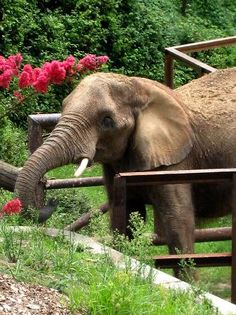 The Maryland Zoo |  Visitors meet more than 1,500 animals including chimpanzees, elephants, leopards and warthogs as they journey on an African safari, pet the animals in the Farmyard or explore the winding trails through the Lyn P. Myerhoff Maryland Wilderness.