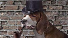 Be less dog: Stop measuring loyalty, says consumer behaviour expert