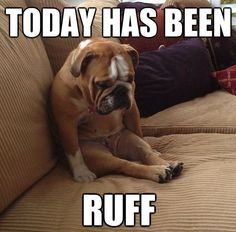 Today has been ruff.