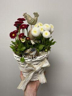 Kvety Eny Grapevine Wreath, Grape Vines, Wreaths, Home Decor, Homemade Home Decor, Door Wreaths, Vineyard Vines, Deco Mesh Wreaths, Garlands