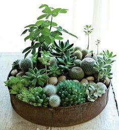 Home Plants Ideas (4)
