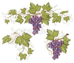 Hand drawn horizontal vector grapevine border and design elements in. Grape Painting, Fruit Painting, Art Floral, Grape Wallpaper, Eid Stickers, Wine Art, Drawing Reference Poses, Cross Paintings, Free Vector Art