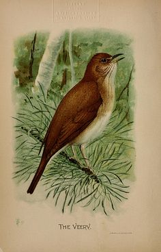Birdcraft : a field book of two hundred song, game, and water birds Natural History, The Borrowers, Images, Birds, Photos, Songs, Water, Painting, Montessori
