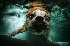 Underwater pup photography by Seth Casteel. If this doesn't make you squeal with glee, nothing will.