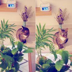 또롱또롱 마리  밤에 잠좀 자자  #고양이 #고양이키우기 #반려묘 #cat #캣스타그램 by kh.miya http://www.australiaunwrapped.com/